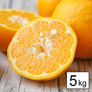 【5kg】愛媛県産ポンカン ※ご家庭用(サイズ不揃い・葉キズ等あり)