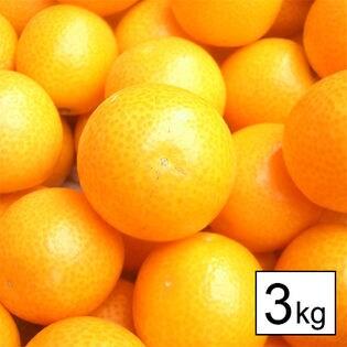 【3kg】宮崎産完熟金柑たまたま