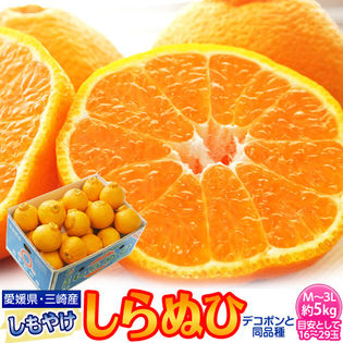 【5kg(M-3L)】糖度13度基準!愛媛県産しもやけ「しらぬひ」