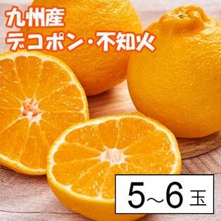 九州産デコポン・不知火5-6玉