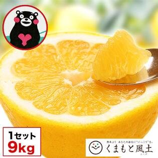【9kg】熊本県産和製グレープフルーツ(河内晩柑)※ご家庭用