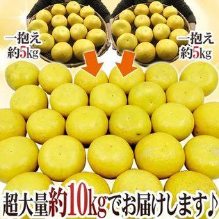 【約10kg サイズお任せ】高知県産 土佐文旦
