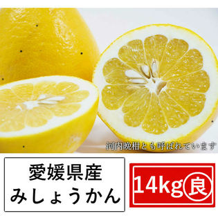 【約14kg】愛媛県産 美生柑(みしょうかん)(良品)