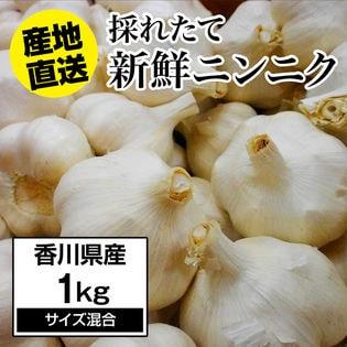 【予約】5/10~順次出荷【約1kg】にんにく 香川県産 新鮮採れたてニンニク