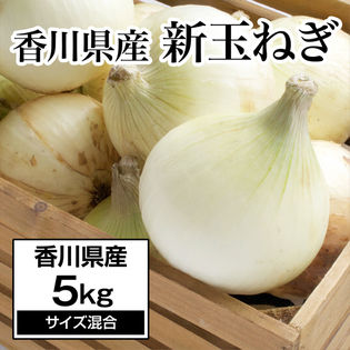 【約5kg】新たまねぎ 香川県産  旬の採れたて玉ねぎをお届け