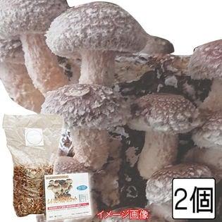 【2個】「しいたけ栽培セット」お部屋で楽しくキノコ狩り!旬の味覚をたっぷり収穫