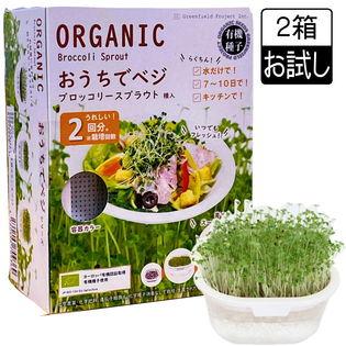 【2箱】お部屋で家庭菜園 水を替えるだけ! おうちでベジ ブロッコリースプラウト栽培キット
