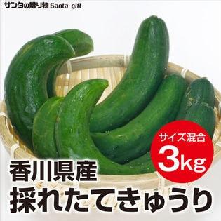 【約3kg】香川県産 新鮮採れたてキュウリ(ご家庭用・サイズ不揃い)