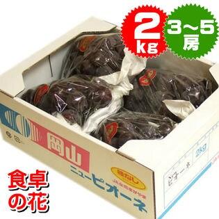 【予約受付】9/14~順次出荷【2kg/3-5房】辻さんの種なしピオーネ(岡山県)