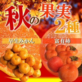【17kg】富有柿7kg産地箱&島っ娘みかん10kg産地箱セット