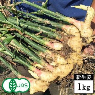 【新生姜 1kg】無農薬・有機JAS認証 黄金生姜(生)