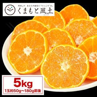 【1セット5kg】熊本みかん(ご家庭用)