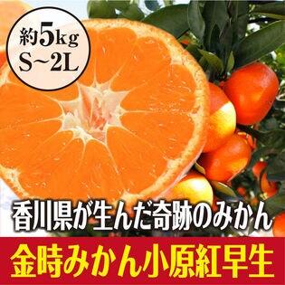 【約5.0kg(S-2L)】香川県産 小原紅早生みかん