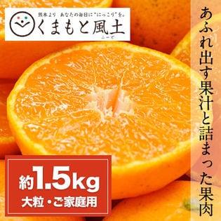 【約1.5kg(2L~3L)】大粒みかん 熊本県産 ご家庭用