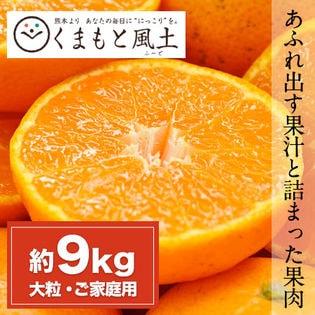 【約9kg(2L~3L)】大粒みかん 熊本県産 ご家庭用