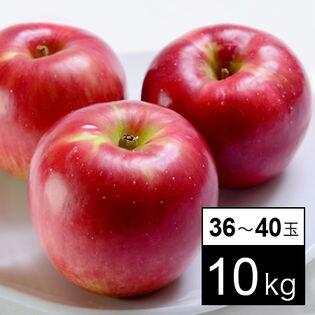 【計10kg箱】旬の林檎のジョナゴールド 36-40玉