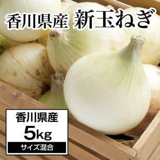 【約5kg】新たまねぎ 香川県産  旬の採れたて新玉ねぎをお届け