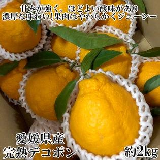愛媛県産 完熟デコポン(良品) 約2kg