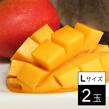 【予約受付】[2玉]完熟マンゴー宮崎 Lサイズ