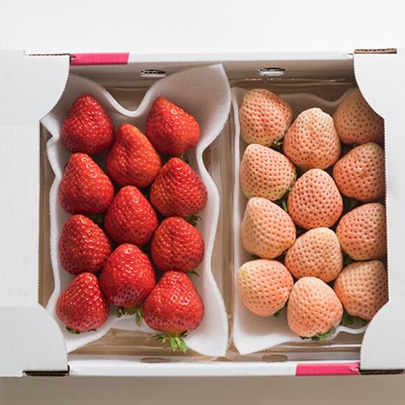 【500g】紅白苺 250g×2パック