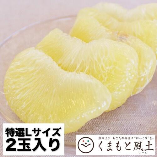 【2玉入】世界最大級の柑橘 特選 晩白柚 ばんぺいゆ Lサイズ
