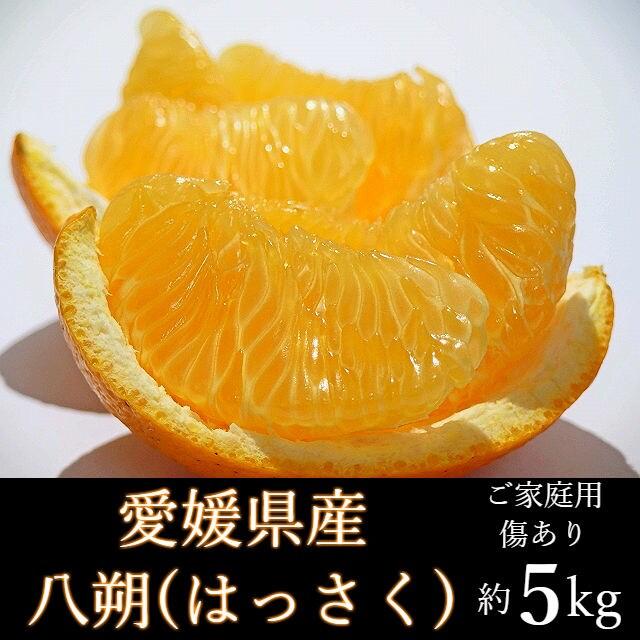 【約5kg】愛媛県産 はっさく(ご家庭用・傷あり)