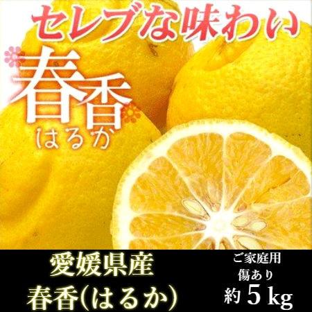 【約5kg】愛媛県産 はるか(ご家庭用・傷あり)