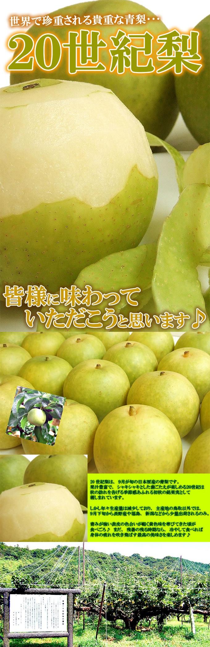 世紀 時期 20 梨